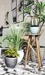 cactus - green interiors, cati and plants