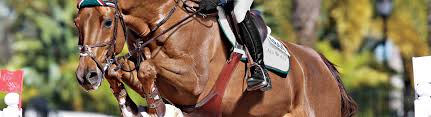 Girth Size Chart Horse How To Select A Girth Dover Saddlery