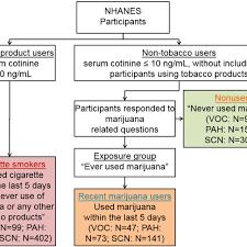 Category Chart For Identifying Nonusers Recent Marijuana