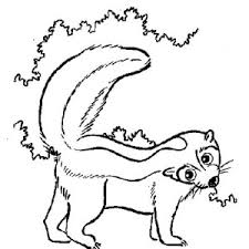 Small Picture North American Striped Skunk Coloring Page Color Luna