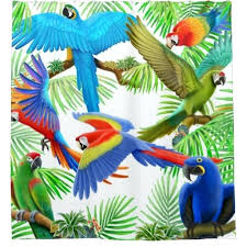 parrot shower curtain hooks colorful macaw jungle parrots shower curtains colorful macaw jungle parrots shower curtains