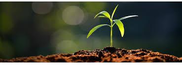 「tree seeds in dirt」的圖片搜尋結果