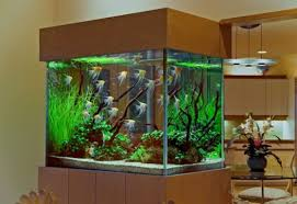 Astounding Small Modern Fish Tank Images Decoration Ideas ...
