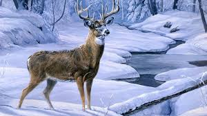 deer pictures deer pictures deer wallpapers deer wallpapers deer 1920x1080