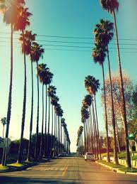 California Palm Trees Tumblr Background HD Wallpaper Background Images
