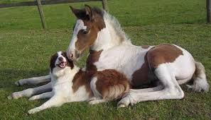 """Képtalálat a következőre: """"horse dog"""""""