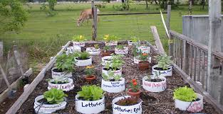 Cool Container Vegetable Gardens  University Of Maryland ExtensionContainer Garden Ideas Vegetables