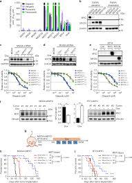 Myc Targeted Cdk18 Promotes Atr And Homologous Recombination