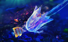 colorful jellyfish wallpaper. Jellyfish Fish Sea Colorful Underwater Animals Wallpaper Inside