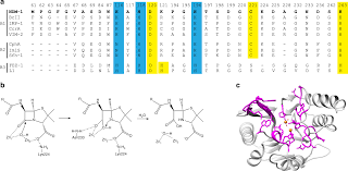 Differential Active Site Requirements For Ndm 1 Lactamase