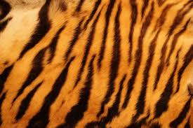 Tiger Pattern Simple Pattern Archives Tiger Foundation