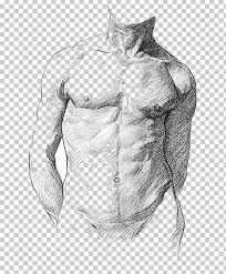 When referencing a structure that is on one side of the body or the other, we use the terms anatomical right and anatomical left.. Human Anatomy For Art Students Human Anatomy For Artists Human Body Png Clipart Abdomen Anatomy Arm
