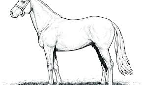 Coloring Pages For Adults Printable Teens Pdf Unicorn Horse Is