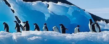 emperor penguin habitat map. Delighful Map Adlie Penguin Throughout Emperor Habitat Map