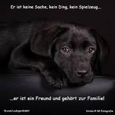 Luckypet Spruch Zitat Hund Hunde Tiere Sprüche Tiere Und Hunde