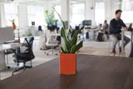 plants for office space. beautiful office a snake plant thrives in low light on plants for office space