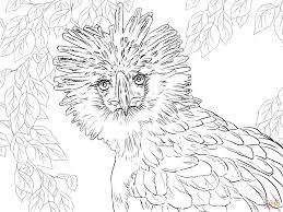 Small Picture Retrato del guila de Filipinas Super Coloring pjaros y aves