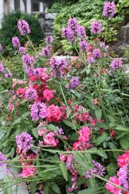 3011 Best GardenGarten Images On Pinterest  Garden Garden Romantic Cottage Gardens