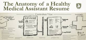 The Anatomy Of A Healthy Medical Assistant Resume