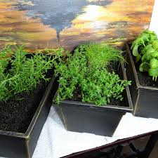 Herb Garden Kitchen Creating A Simple Indoor Kitchen Herb Garden Indoor Apartment