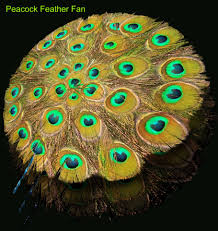 Peacock Decorations For Bedroom Peacock Bedroom Decor Bedroom Peacock Alley Sheets Decor Peacock