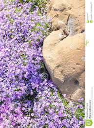 Resultado de imagen de canto de flores imagenes