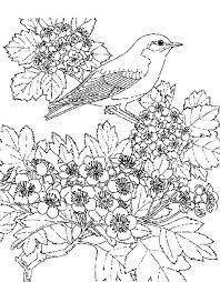 Pretty Flower Coloring Pages Danielstevensinfo