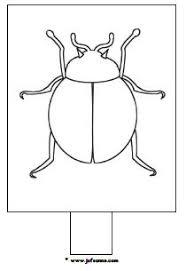 Insecten Downloads Jufsannecom