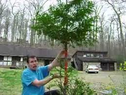 tree bark repair methods. Plain Bark Shows How To Wrap The Tree Bark Repair Tape Deer Damage Repellent  YouTube Intended Methods