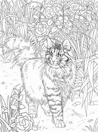 Small Picture Look Real Cat Coloring Pages Coloring Coloring Pages