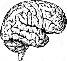 Brain Clipart Free Download Best Brain Clipart On Clipartmagcom
