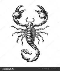 Ručně Tažené Skica štíra Tetování Zvířata Vektorové Ilustrace