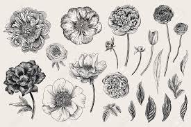 Set Of Spring Flowers Vintage Vector Botanical Illustration