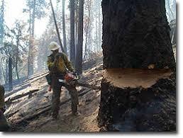 essay deforestation essay on deforestation for kids children and deforestation causes effects and solutions conserve