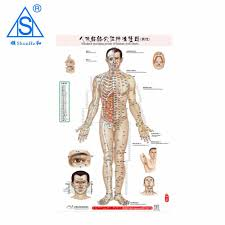 Chinese Medical Acupuncture Points Charts Buy Medical Wall Chart Acupuncture Points Charts Medical Acupuncture Chart Product On Alibaba Com