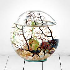 beachworld glass sphere with gorgonia ecosystem with live shrimp menkind