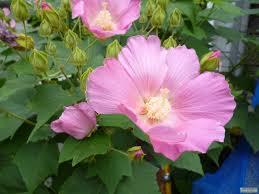 狛犬報道室色々フリー写真館 散歩夏は向日葵 それ以外の花は