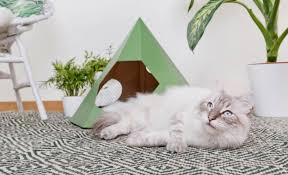 design for es cat tipi