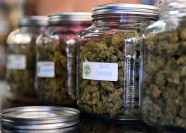 obama s medical marijuana prosecutions probably aren t legal the highly rated strain of medical marijuana blue dream is displayed among others