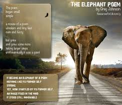 Elephant Quotes Custom Elephant Quotes Quotes
