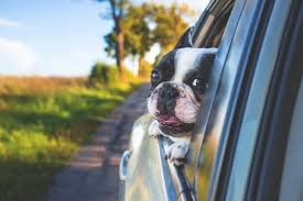 How to Eliminate Dog Allergies and Pet Dander