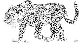 Small Picture Leopard 6 coloring page Free Printable Coloring Pages