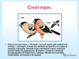 Презентация на тему Зимующие птицы Творческий проект ученика  3 Снегири