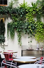 Love how these plants are draping down and adding movement to an otherwise  normal wall.