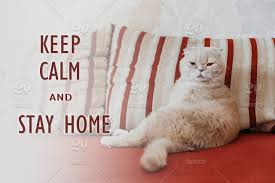 Keep calm and stay home quote banner with text. Funny scottish fold cream  cat lies on a sofa Keep, calm, stay, home, cat, self- isolation, quote,  Social, Distancing, quarantine, banner, background, web,