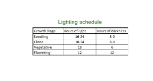 The Cannabis Light Cycle For Flowering Marijuana Plants Ilgm