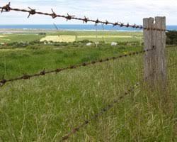 barbed wire fence cattle. Barbed Wire Fence Cattle T
