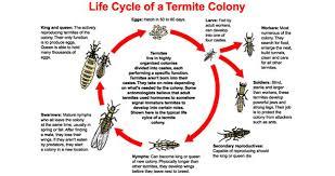 pest control spring hill fl. Brilliant Control Termite Treatment Pest Control In And Near Spring Hill Florida And Fl O