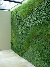 a green wall planted with easy to grow herbs.