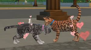 dogs and cats mating together.  Cats Pregnancy And Dogs Cats Mating Together C